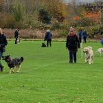 Dog training temporarily suspended in 2021