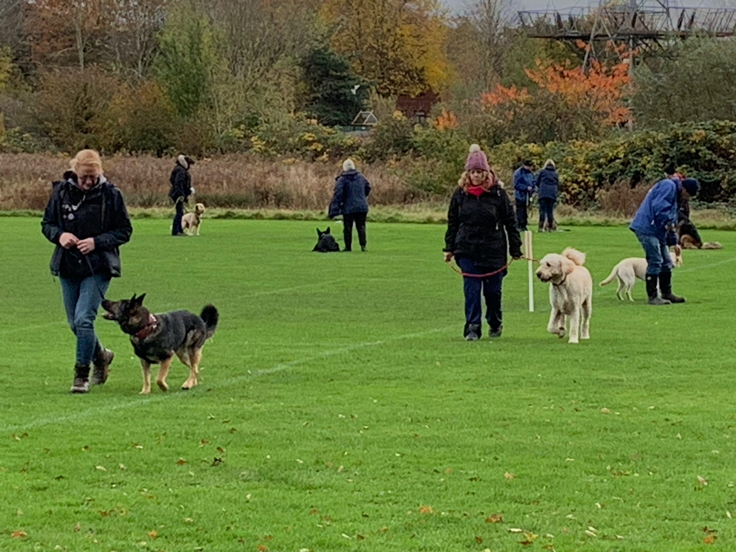 Read more about the article Dog training temporarily suspended in 2021